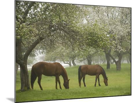 Two Horses Eating in Spring Pasture, Cape Elizabeth, Maine-Nance Trueworthy-Mounted Photographic Print