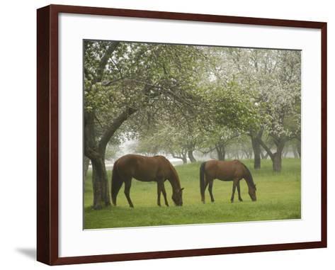 Two Horses Eating in Spring Pasture, Cape Elizabeth, Maine-Nance Trueworthy-Framed Art Print