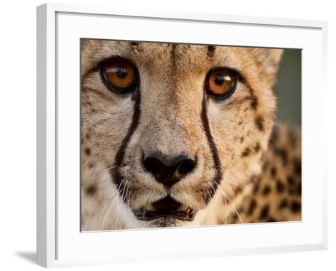 Close Up Portrait of a Cheetah.-Karine Aigner-Framed Art Print