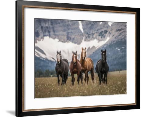 Horses Along the Rocky Mountain Front, Montana.-Steven Gnam-Framed Art Print