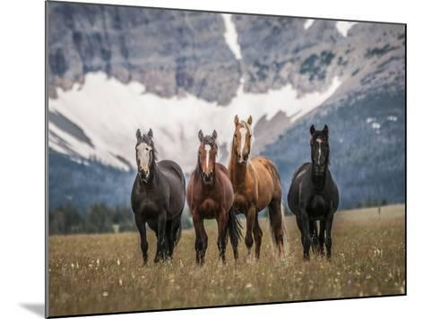Horses Along the Rocky Mountain Front, Montana.-Steven Gnam-Mounted Photographic Print