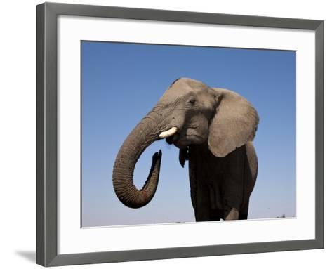Close Up Portrait of an African Elephant on a Clear Blue Sky.  Hwange National Park, Zimbabwe-Karine Aigner-Framed Art Print