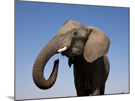 Close Up Portrait of an African Elephant on a Clear Blue Sky.  Hwange National Park, Zimbabwe-Karine Aigner-Mounted Photographic Print
