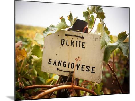 Vineyards-Ian Shive-Mounted Photographic Print