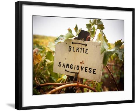 Vineyards-Ian Shive-Framed Art Print