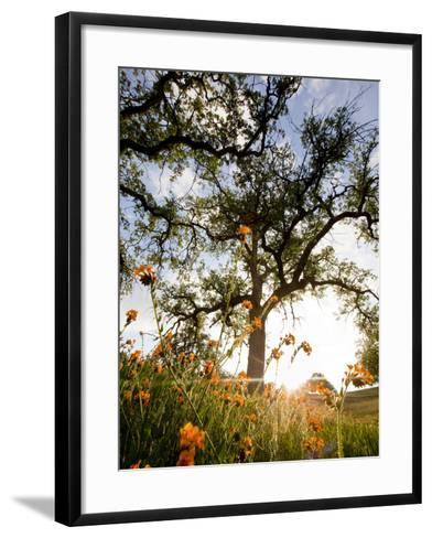 Tollhouse Ranch, Caliente, California: Rolling Green Hills and Oak Trees of the Tollhouse Ranch.-Ian Shive-Framed Art Print