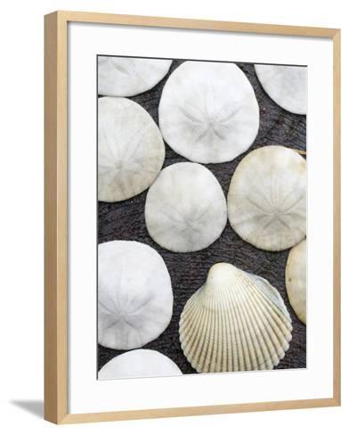 Sanddollars Set on a Stump Along Trail in Oregon.-Justin Bailie-Framed Art Print