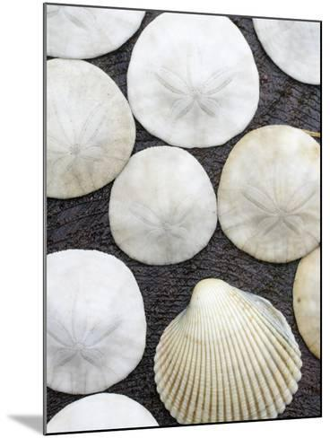 Sanddollars Set on a Stump Along Trail in Oregon.-Justin Bailie-Mounted Photographic Print