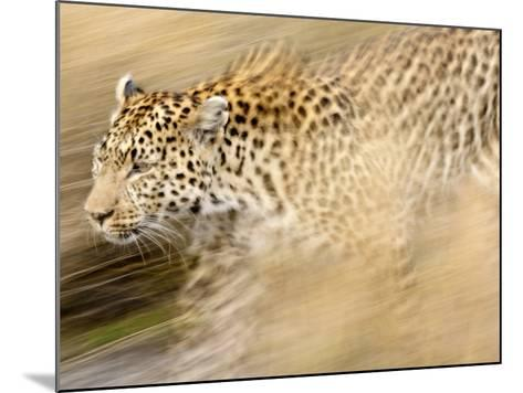 A Female Leopard Stalking Her Prey in Blurred Motion.-Karine Aigner-Mounted Photographic Print