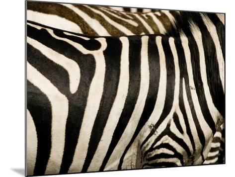 A Pattern of Stripes on a Burchell's Zebra.  Kenya.-Karine Aigner-Mounted Photographic Print