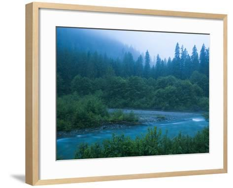 Evening in the Forest, Washington-Ethan Welty-Framed Art Print