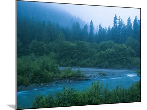 Evening in the Forest, Washington-Ethan Welty-Mounted Photographic Print