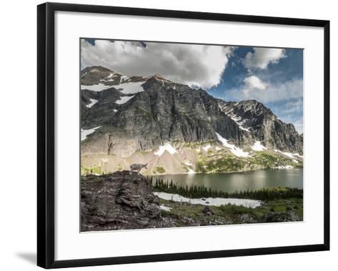 A Mountain Goat in Glacier National Park, Montana.-Steven Gnam-Framed Art Print