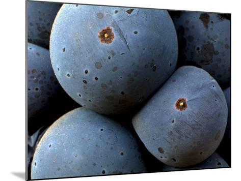 Healdsberg, Sonoma County, California, Vineyards-Ian Shive-Mounted Photographic Print