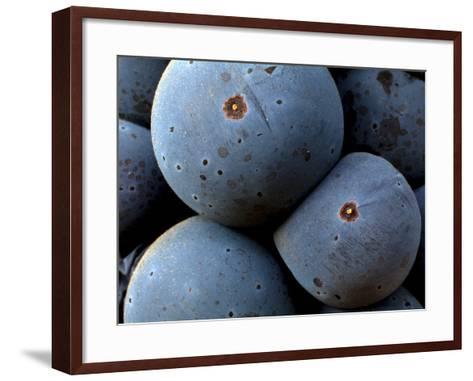 Healdsberg, Sonoma County, California, Vineyards-Ian Shive-Framed Art Print