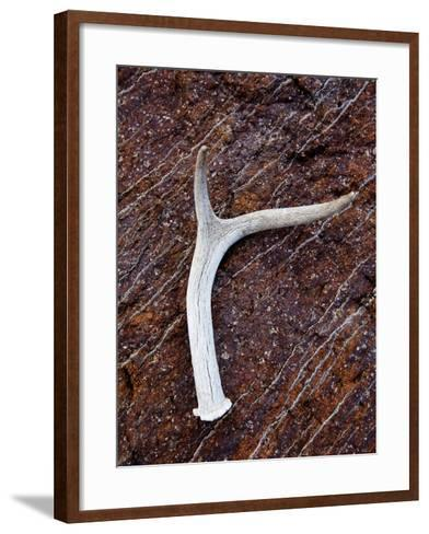 Detail of an Antler on a Rock Found on the Mountain Side of Davis Mountain Preserve, Texas-Ian Shive-Framed Art Print