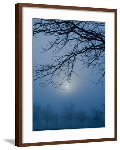 Fog and Tree Silhouette in Morning-James Shive-Framed Art Print
