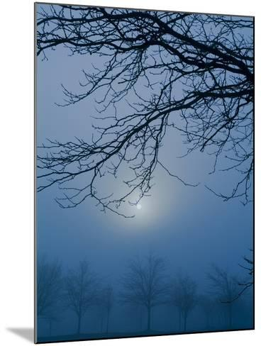 Fog and Tree Silhouette in Morning-James Shive-Mounted Photographic Print