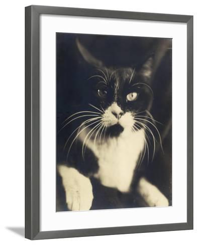Cat Minus Me, Photograph Used in the Superimposed Photo Me and Cat-Wanda Wulz-Framed Art Print