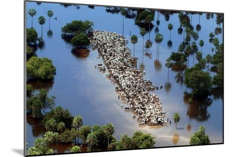 Cattle Gather on a Strip of Dry Land in Low-Lying Areas of the Bolivian Amazon-Martin Alipaz-Mounted Photographic Print