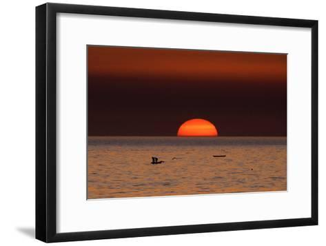 Fishermen Lay their Nets in the Sea as the Sun Sets-Mohammed Saber-Framed Art Print