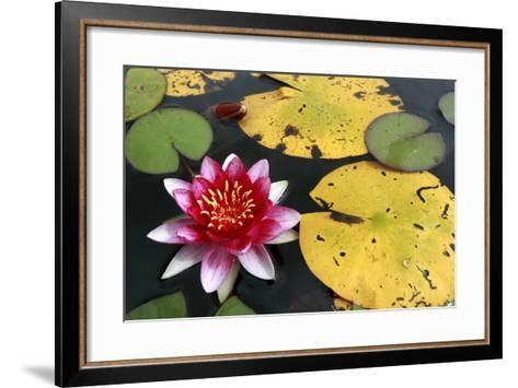Water Lily-Tobias Hase-Framed Art Print