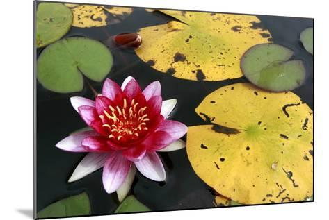 Water Lily-Tobias Hase-Mounted Photographic Print