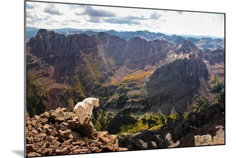 Mountain Goat Stands at the Edge of Bouldery Cliff at the Maroon Bells in Colorado-Kent Harvey-Mounted Photographic Print