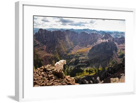 Mountain Goat Stands at the Edge of Bouldery Cliff at the Maroon Bells in Colorado-Kent Harvey-Framed Art Print