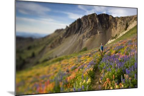 A Woman Enjoys a Morning Trail Run in a Meadow of Wildflowers at Snowbird Ski and Summer Resort, Ut-Adam Barker-Mounted Photographic Print