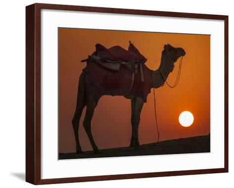 Camel Silhouetted Against the Setting Sun in the Thar Desert Near Jaisalmer, India-Frances Gallogly-Framed Art Print