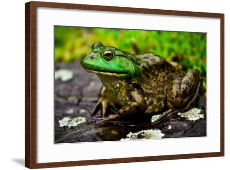 Fat Bull Frog Lords over Connecticut Water-Daniel Gambino-Framed Art Print