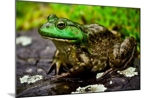 Fat Bull Frog Lords over Connecticut Water-Daniel Gambino-Mounted Photographic Print