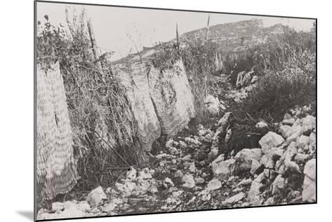 World War I: Path Hidden by Screens on the Mountains of Veneto--Mounted Photographic Print