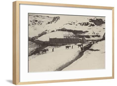 World War I: Donkeys and Mules Carrying Food and Ammunition in a Military Unit--Framed Art Print