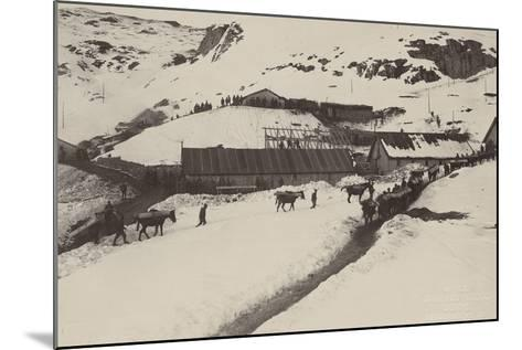 World War I: Donkeys and Mules Carrying Food and Ammunition in a Military Unit--Mounted Photographic Print