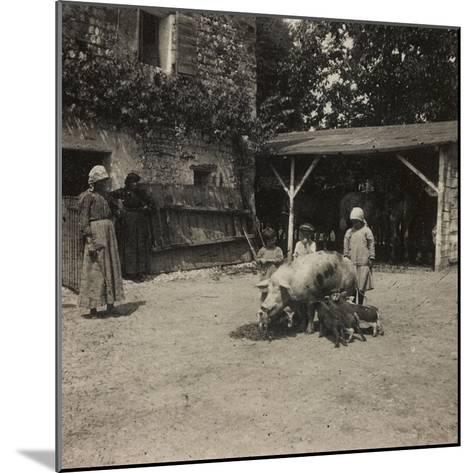 WWI: Inhabitants of Soleschiano with a Sow--Mounted Photographic Print