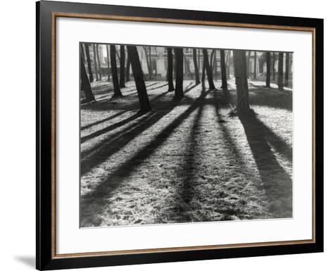 Timber-Backlit Pinewood Viareggio-Renzo Ferrini-Framed Art Print