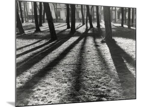 Timber-Backlit Pinewood Viareggio-Renzo Ferrini-Mounted Photographic Print