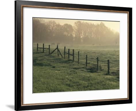 Cows in Morning Mist Along the Natchez Trace, Alabama--Framed Art Print