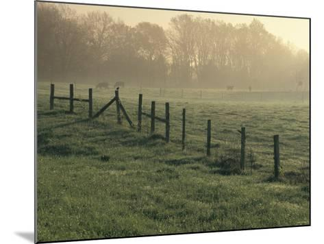 Cows in Morning Mist Along the Natchez Trace, Alabama--Mounted Photographic Print