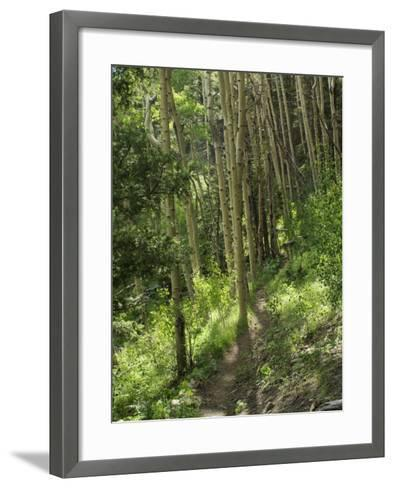 Trail Through Aspen Forest in the Pecos Wilderness, Sangre De Cristo Mountains, New Mexico--Framed Art Print