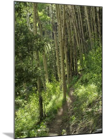 Trail Through Aspen Forest in the Pecos Wilderness, Sangre De Cristo Mountains, New Mexico--Mounted Photographic Print