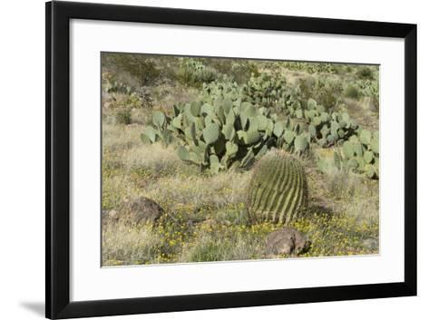 Prickly-Pear, Barrel Cactus and Other Chihuahuan Desert Plants in Southern New Mexico--Framed Art Print