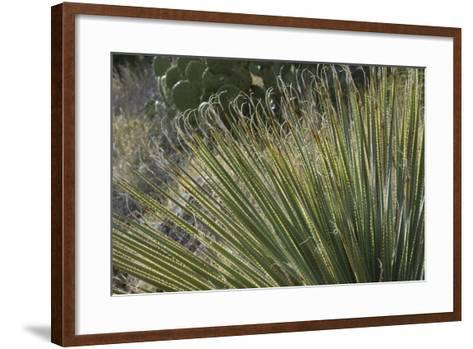 Narrow-Leaf Yucca in the Little Florida Mountains, New Mexico--Framed Art Print