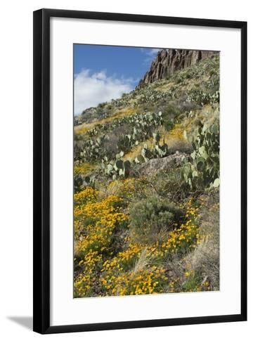 Mexican Poppies and Other Chihuahuan Desert Plants in the Little Florida Mountains, New Mexico--Framed Art Print