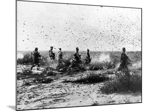 Morocco: Locusts, 1954--Mounted Photographic Print