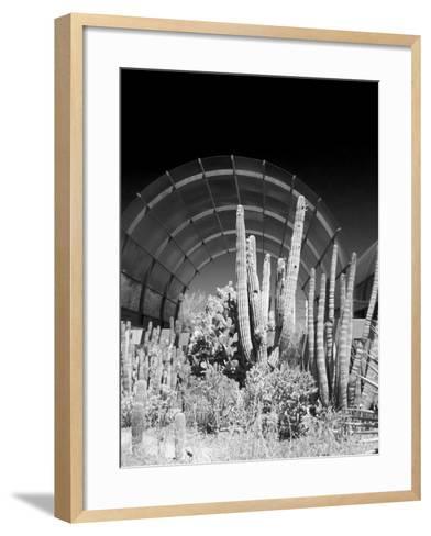 Phoenix Botanical Gardens, Arizona,USA-Anna Miller-Framed Art Print