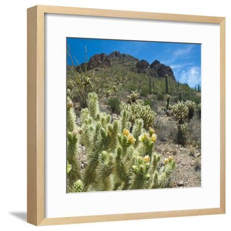 Teddybear Cholla Cactus in Arizona Desert Mountains-Anna Miller-Framed Art Print