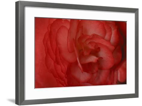 Red Begonia Abstract-Anna Miller-Framed Art Print